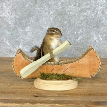 Canoe Chipmunk Novelty Mount For Sale #22613 @ The Taxidermy Store