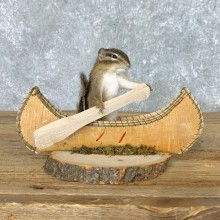 Canoe Chipmunk Novelty Mount For Sale #22614 @ The Taxidermy Store