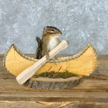 Canoe Chipmunk Novelty Mount For Sale #22616 @ The Taxidermy Store