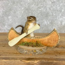 Canoe Chipmunk Novelty Mount For Sale #22617 @ The Taxidermy Store