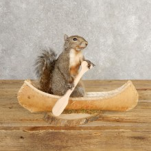 Canoe Grey Squirrel Novelty Mount For Sale #21014 @ The Taxidermy Store