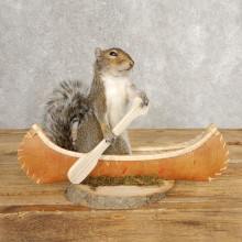 Canoe Grey Squirrel Novelty Mount For Sale #21015 @ The Taxidermy Store