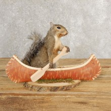 Canoe Grey Squirrel Novelty Mount For Sale #21018 @ The Taxidermy Store