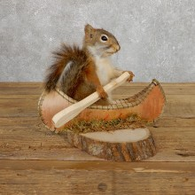 Canoe Red Squirrel Novelty Mount For Sale #19666 @ The Taxidermy Store