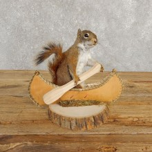 Canoe Red Squirrel Novelty Taxidermy Mount For Sale