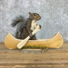 Canoe Squirrel Novelty Mount For Sale #22419 @ The Taxidermy Store