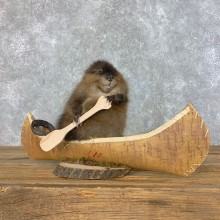 Canoeing Muskrat Novelty Taxidermy Mount For Sale