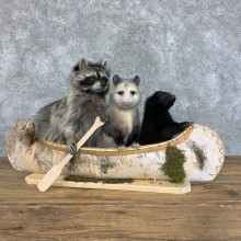 Canoeing Pals Novelty Mount For Sale #22401 @ The Taxidermy Store