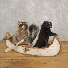 Canoeing Raccoon and Skunk Novelty Mount For Sale #20613 @ The Taxidermy Store