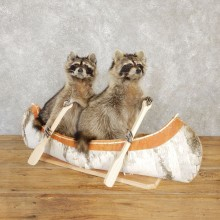 Canoeing Raccoons Novelty Mount For Sale #20206 @ The Taxidermy Store