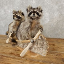 Canoeing Raccoons Novelty Mount For Sale #20207 @ The Taxidermy Store