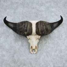 Cape Buffalo Skull Horns Mount For Sale #13903 For Sale @ The Taxidermy Store