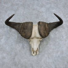 Cape Buffalo Skull Horns Mount For Sale #13905 For Sale @ The Taxidermy Store