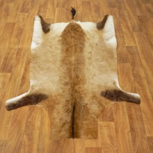 Cape Hartebeest Tanned Skin Taxidermy Rug For Sale #17462 @ The Taxidermy Store