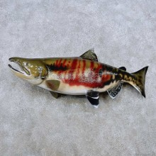 Chum Salmon Fish Mount For Sale #14375 @ The Taxidermy Store