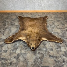 Cinnamon Black Bear Full-Size Rug For Sale #21180 @ The Taxidermy Store