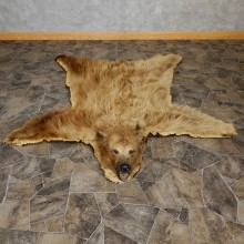 Cinnamon Phase Black Bear Full-Size Rug For Sale #18969 @ The Taxidermy Store