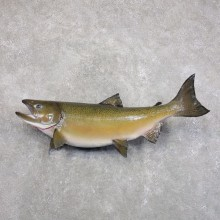 Coho Salmon Fish Mount For Sale #22288 @ The Taxidermy Store