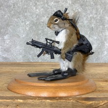 Commando Squirrel Novelty Mount For Sale #22998 @ The Taxidermy Store
