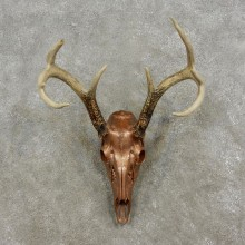 Copper Coated Whitetail Deer Skull European Taxidermy Mount For Sale