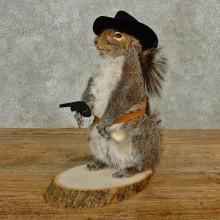 Cowboy Grey Squirrel Novelty Taxidermy Mount For Sale