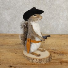Cowboy Squirrel Novelty Mount For Sale #20731 @ The Taxidermy Store