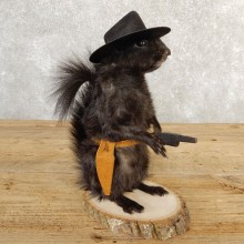 Cowboy Squirrel Novelty Mount For Sale #20737 @ The Taxidermy Store