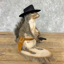 Cowboy Squirrel Novelty Mount For Sale #22434 @ The Taxidermy Store