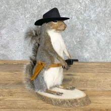 Cowboy Squirrel Novelty Mount For Sale #22437 @ The Taxidermy Store