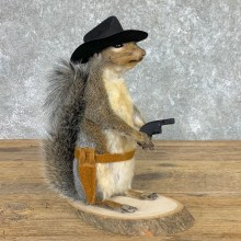 Cowboy Squirrel Novelty Mount For Sale #22440 @ The Taxidermy Store