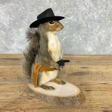 Cowboy Squirrel Novelty Mount For Sale #22443 @ The Taxidermy Store
