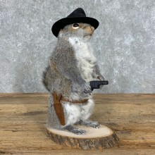 Cowboy Squirrel Novelty Mount For Sale #23049 @ The Taxidermy Store