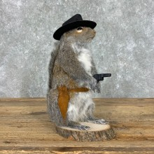 Cowboy Squirrel Novelty Mount For Sale #23051 @ The Taxidermy Store