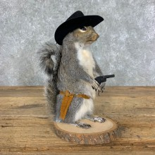 Cowboy Squirrel Novelty Mount For Sale #23054 @ The Taxidermy Store