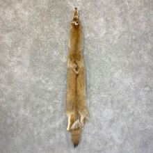 Coyote Tanned Hide For Sale #22756 @ The Taxidermy Store