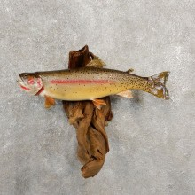 Cutthroat Trout Fish Mount For Sale #20581 @ The Taxidermy Store