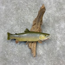 Cutthroat Trout Fish Mount For Sale #21611 @ The Taxidermy Store
