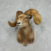 Desert Bighorn Sheep Ram Head Taxidermy Shoulder Mount For Sale