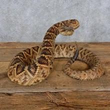 Eastern Diamondback Rattlesnake Taxidermy Mount For Sale
