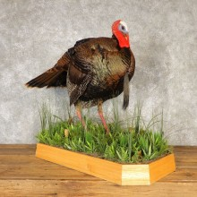 Eastern Turkey Bird Mount For Sale #20609 @ The Taxidermy Store