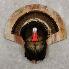 Eastern Wild Turkey Half Life-Size Taxidermy Mount For Sale