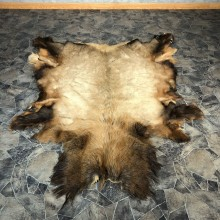 Elk Hide Mount For Sale #20075 @ The Taxidermy Store