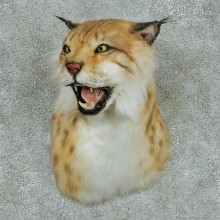 Reproduction Eurasian Lynx Taxidermy Shoulder Mount For Sale