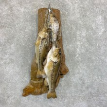 Fish Stringer Taxidermy Mount For Sale #22075 @ The Taxidermy Store