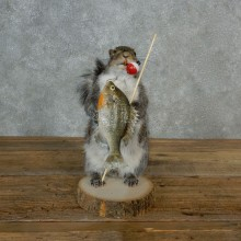 Fishing Squirrel Novelty Mount For Sale #17128 @ The Taxidermy Store