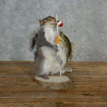 Fishing Grey Squirrel Novelty Taxidermy Mount For Sale