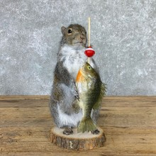 Fishing Squirrel Novelty Mount For Sale #22943 @ The Taxidermy Store