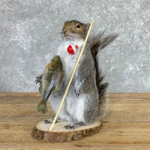 Fishing Squirrel Novelty Mount For Sale #22944 @ The Taxidermy Store