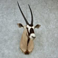 African Gemsbok Shoulder