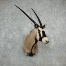 Gemsbok Oryx Taxidermy Shoulder Mount For Sale